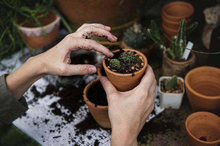 Patio Garden Blogs